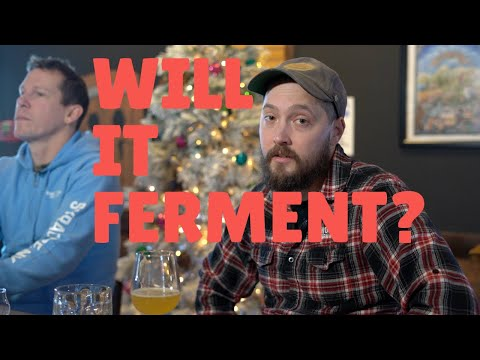 Will it ferment? - the making of fermented fruit rings and skeeter pee.
