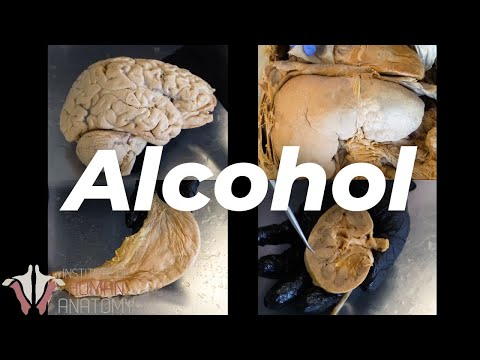 What alcohol does to your body