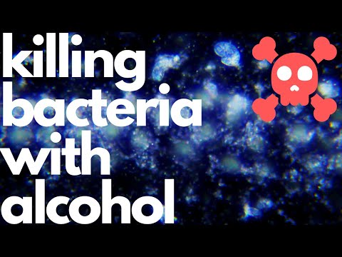 Killing bacteria under the microscope with alcohol - rip bacteria colony
