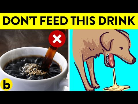 11 everyday drinks that can kill your dog