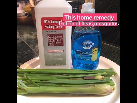 Home remedy get rid of fleas & mosquitos for dogs & cats. natural ingredients and work!