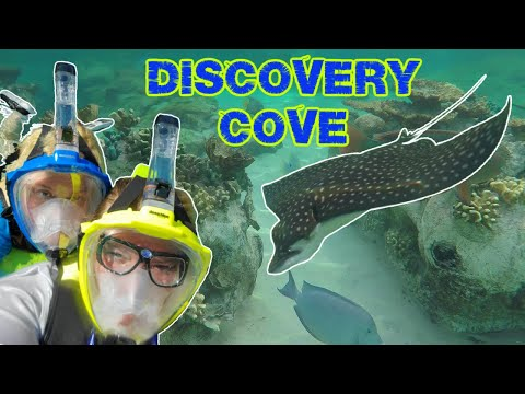 Discovery cove adventure