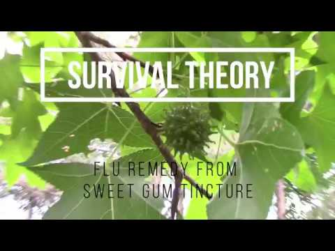 Flu remedy from sweet gum tincture