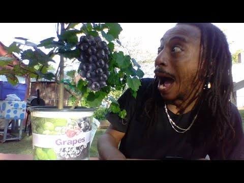 How to grow grapes - easy healthy gardening for beginners 2020 - october planting zone 7 - #withme