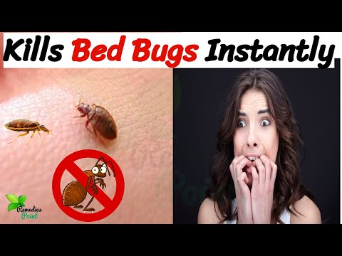 Proven method to get rid of beg bugs permanently | what kills bed bugs instantly