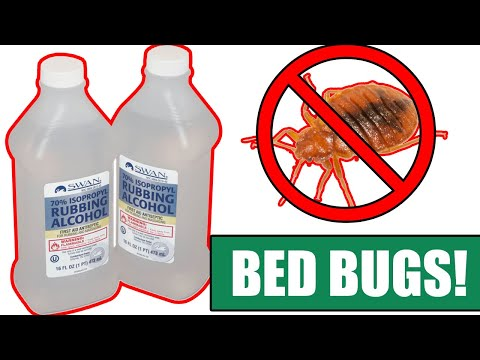 How to kill bed bugs completely using alcohol - (be sure to watch til the end)