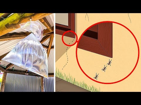 10 natural ways to get rid of ants and bugs in your house