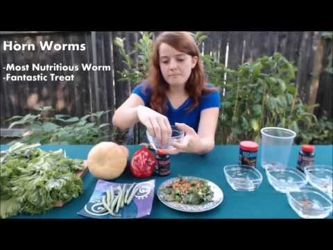 What do bearded dragons eat to live a healthy life