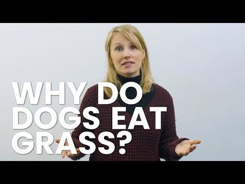 3 reasons why your dog eats grass