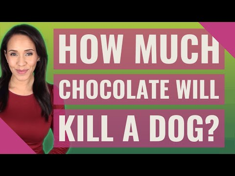 How much chocolate will kill a dog?